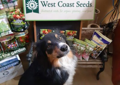 Vegetable Seeds   .. like... carrots!