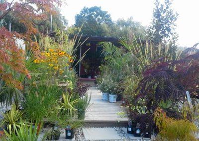 Assorted Grasses & Perennials
