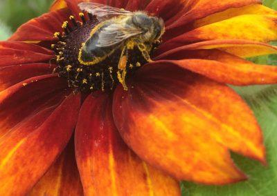Pollinator!