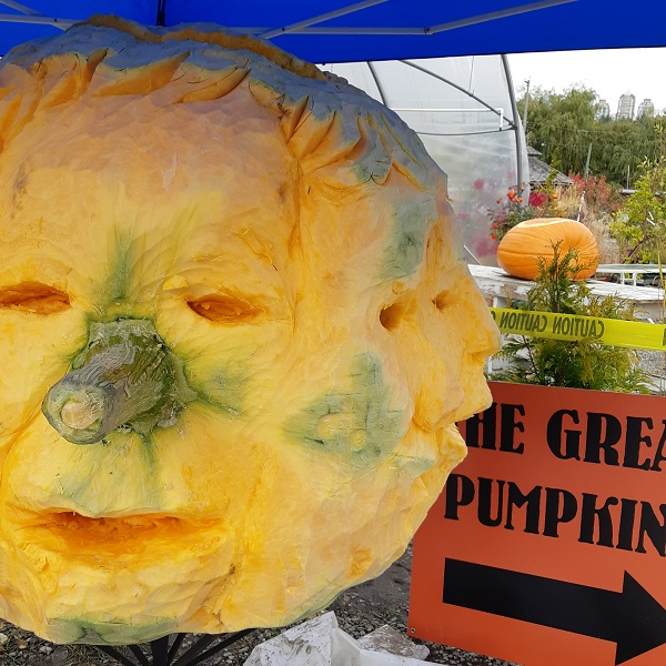 Giant_Pumpkins_Burnaby